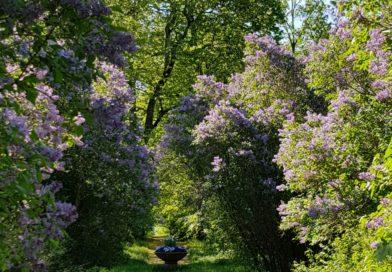När den kalla våren blev sommar, direkt!