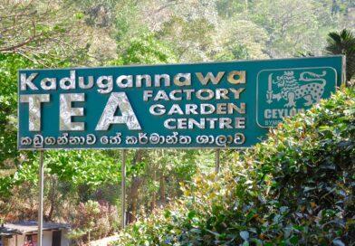 Vi besöker teplantage och tefabrik i Sri Lanka