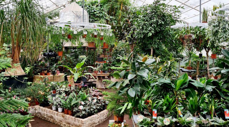 Exotiskt trädgårdsmästeri i Malmö