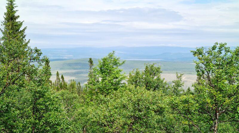 En liten glimt av Sonfjällets nationalpark